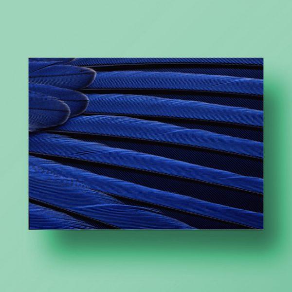 feathers-landscape